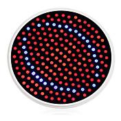 24W E26/E27 LED 글로우 조명 200 1500 lm 레드 / 블루 AC 85-265 V 1개