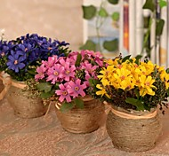 """5.9""""L 5.9""""H Beauty Daisies in Hemp Rope Pot"""