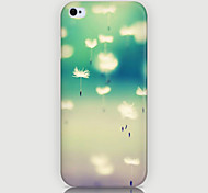 The Dandelion Pattern Phone Back Case Cover for iPhone5C