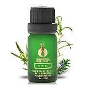 Rosemary  Enhance Memory Essential Oil 10ml