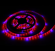 5M MORSEN®5M 36W Hydroponic Systems Led Plant grow light Led Grow Strip Light  Full spectrum Grow Box with Driver