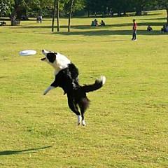 개 반려동물 장난감 플라잉 디스크 견고함 레드 / 블랙 / 블루 / 퍼플 / 오렌지 플라스틱