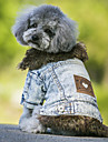 Dog Coat / Denim Jacket/Jeans Jacket Blue / Black Dog Clothes Winter / Spring/Fall Jeans Cowboy / Fashion / Keep Warm / Windproof